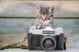 Kitten with vintage photo camera