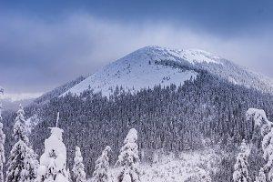 Winter landscape of the mountains. Ukrainian Carpathians in winter. Snow-covered Ukrainian mountains.
