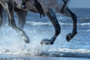 Horse run gallop on water
