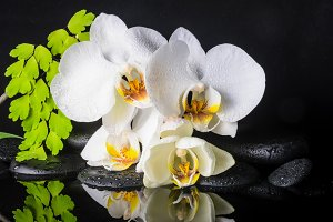 spa of white orchid (phalaenopsis)