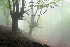 forest with scary trees and fog