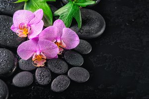 spa concept of twig lilac orchid