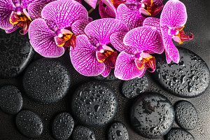 spa concept of twig of orchid