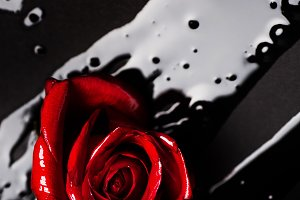 Glossy Red Rose