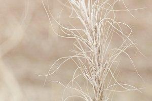Dried Plant