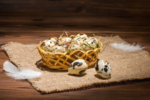 quail eggs with straw and feathers
