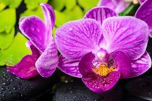 Spa still life of violet orchid