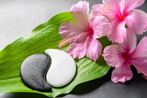 pink hibiscus flowers and Yin-Yang