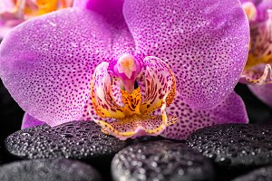 lilac orchid flower with water drops