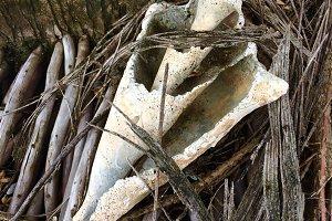 Shell & Driftwood, Panama