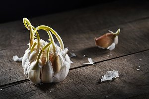sprouting garlic on wooden table