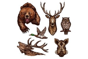 Vector sketch icons of wild animals birds