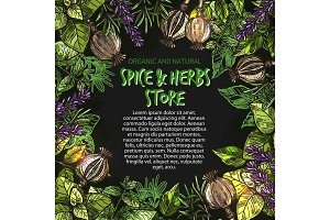 Vector sketch poster of spices and herbs