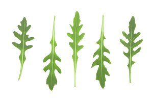 Green fresh rucola or arugula leaf isolated on white background. Top view. Flat lay pattern. Set or collection
