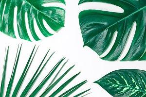 Creative Tropical Fresh Palm Leaves.