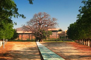 St Maryam Deari chapel, lying in a baobab, Keren, Eritrea