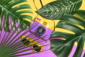 Tropical Palm Leaves. Summer Hipster