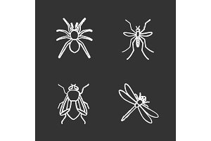 Insects chalk icons set