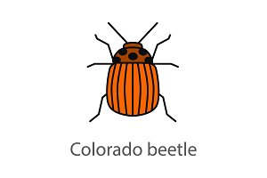 Colorado beetle color icon