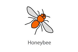 Honey bee color icon