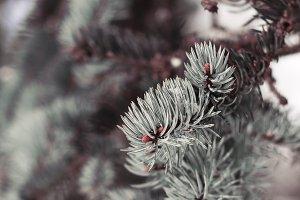 Winter Rustic Nature Stock Photo