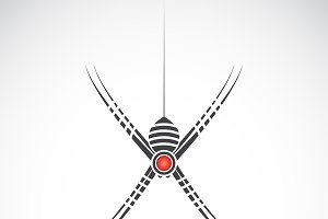 Vector of spider design. Insect.