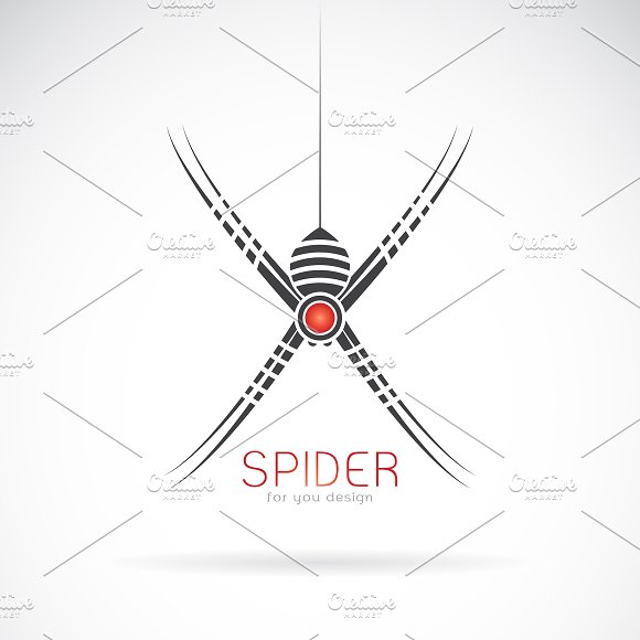 Vector Of Spider Design Insect
