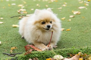 Little dog lying on the grass