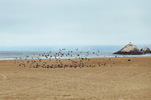 Birds in Flight on Beach