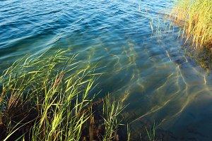 Summer lake calm rushy shore