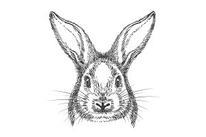 Vintage hand drawn bunny face sketch