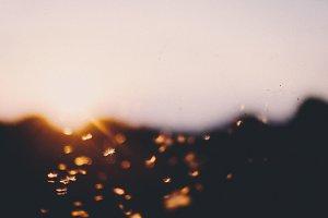 Dandelion fly at sunset