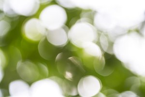 Green bokeh background. Blur blurred image of garden in sunny day. Natural background concept for text