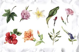 Tropical flowers set (VECTOR)