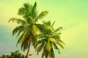 Toned tropical palm trees