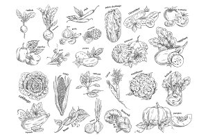 Sketch of vegetarian food. Vegetables