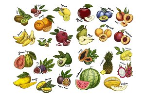 Sketches of fruit food. Agriculture theme