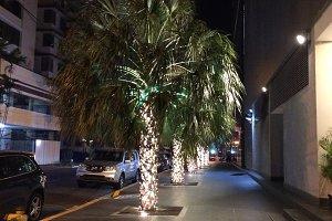Palm Trees With Lights, Panama City