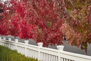 Autumn tree and white fence
