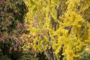 Autumn scene, sidewalk