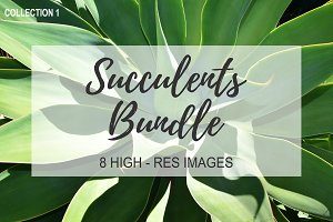 Succulents Bundle Stock Photos - 1