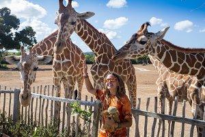 Girl Feeding Giraffe at Zoo