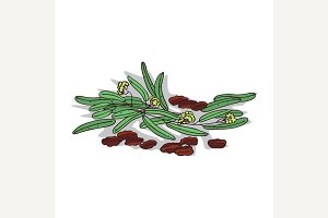 Isolated clipart Jojoba