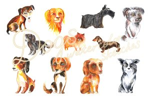 Dogs (watercolor sketches)
