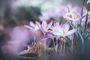 Outdoor springtime flowers