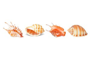 Set of vector seashells