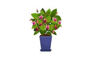 Fuchsia house plant