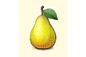 Pear with leaf. Fruit in vintage