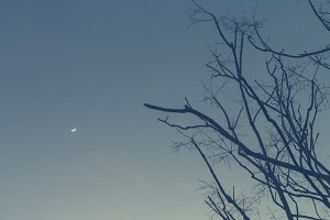 The moon and the tree