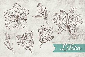 Doodle Lilies + Bonus pattern